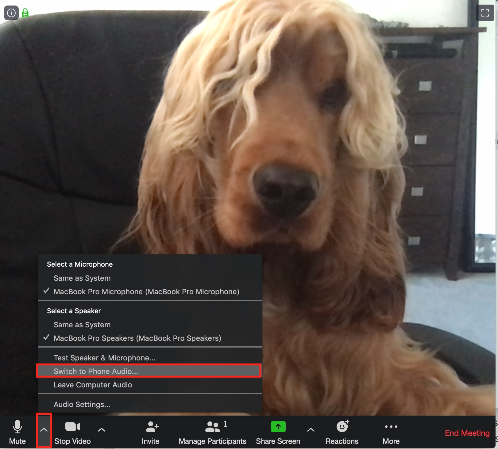 Dog on zoom call - instructions for switch to phone audio