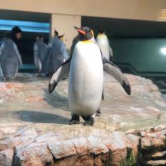penguin at Schönbrunn Zoo