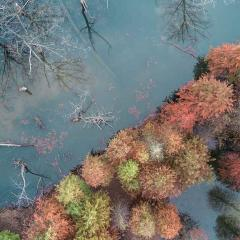 This is an image of a lake surrounded by trees