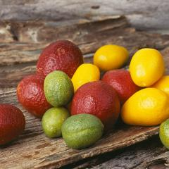 Native lime cultivars, Image: CSIRO via Wikimedia Commons