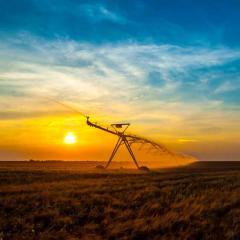 Wheat irrigation system