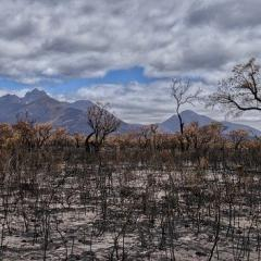 This is an image of burnt trees and damage caused by a bushfire
