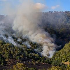 This is an image of smoke from a bushfire billowing out from treelined hills