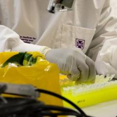 laboratory testing at the University of Queensland